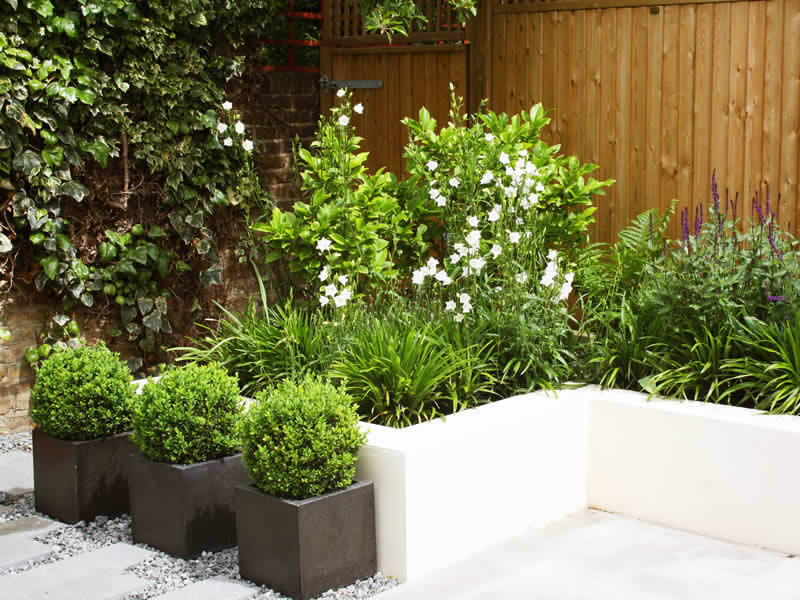 Clean Contemporary Urban Garden | Caro Garden Design