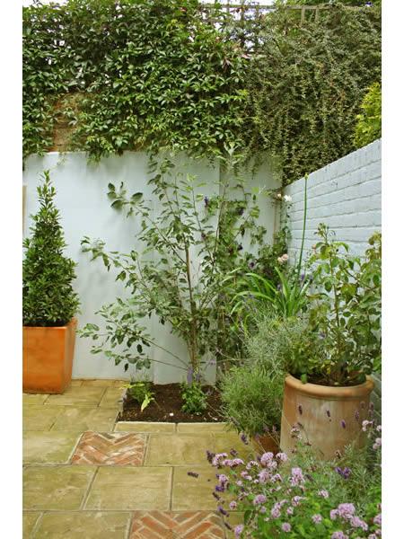 Small courtyard garden caro garden design for Small courtyard garden designs