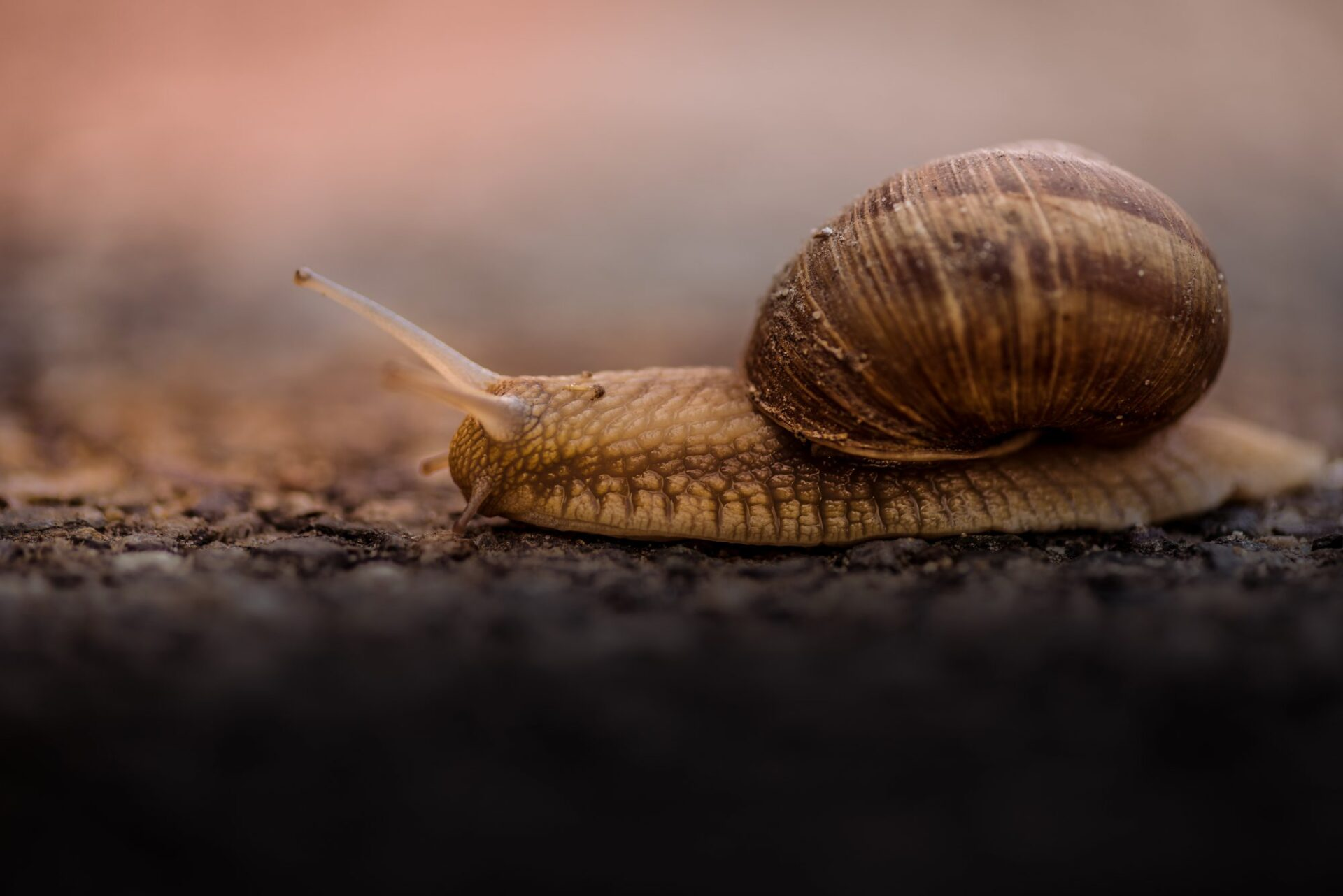 Slugs and snails – winning the war