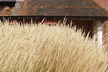 Caro Garden Design - Calamagrostis