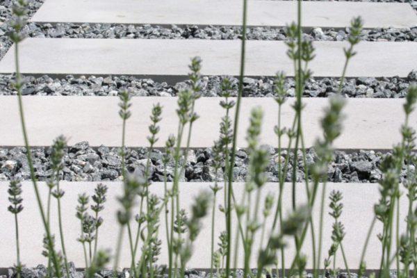 Aromatic garden - lavendar